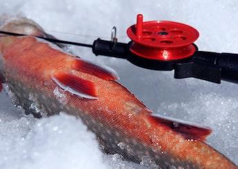 Isfiske: Utmana den kalla och tjocka isen